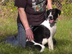 Lucky, a hound mix abandoned by her owner and pulled from Liberty County AC by Carpathia Paws in November 2011